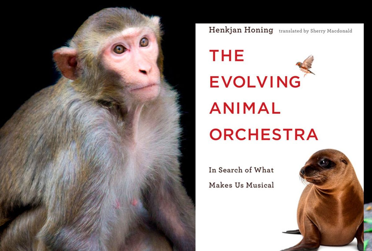 """""""The Evolving Animal Orchestra: In Search of What Makes Us Musical"""" By Henkjan Honing (MIT Press/Getty/Robbie Ross)"""