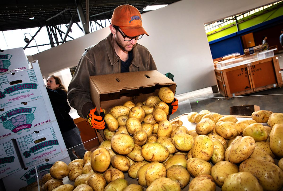 Recovering potatoes for Food Forward.  (Photo © Eron Rauch)