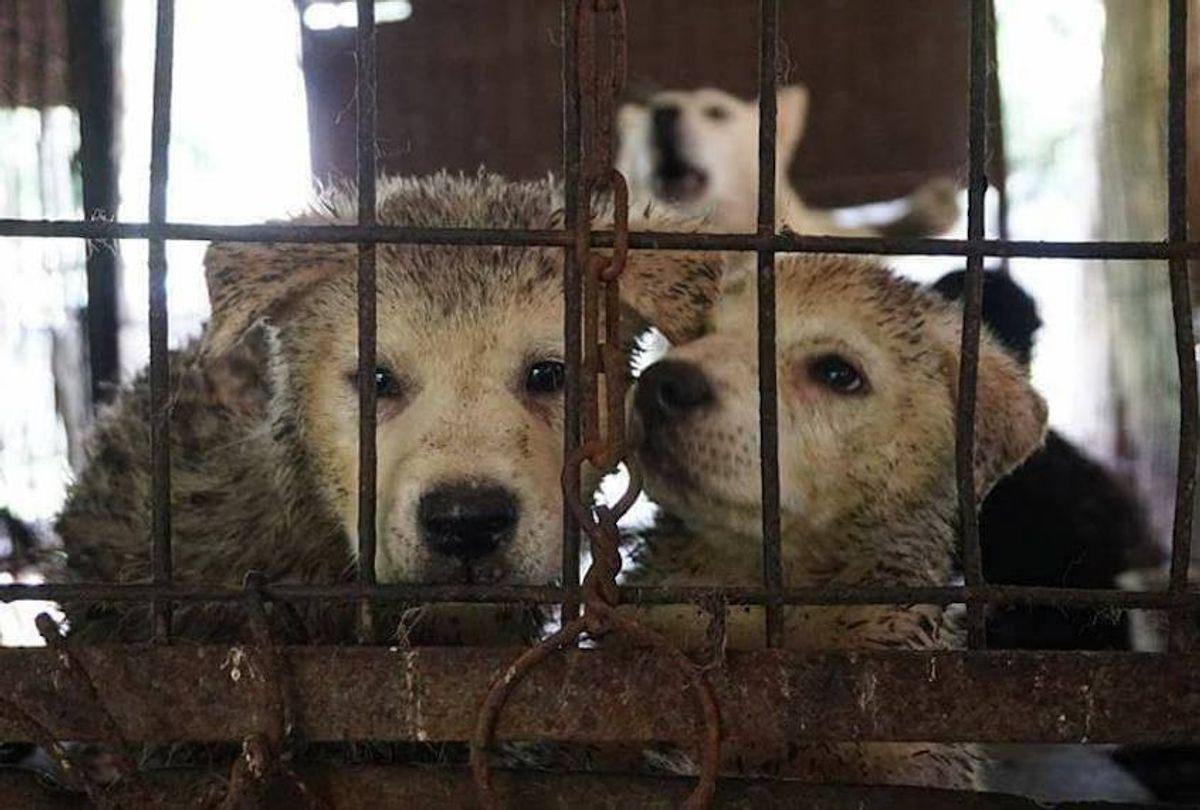 (Save Korean Dogs)