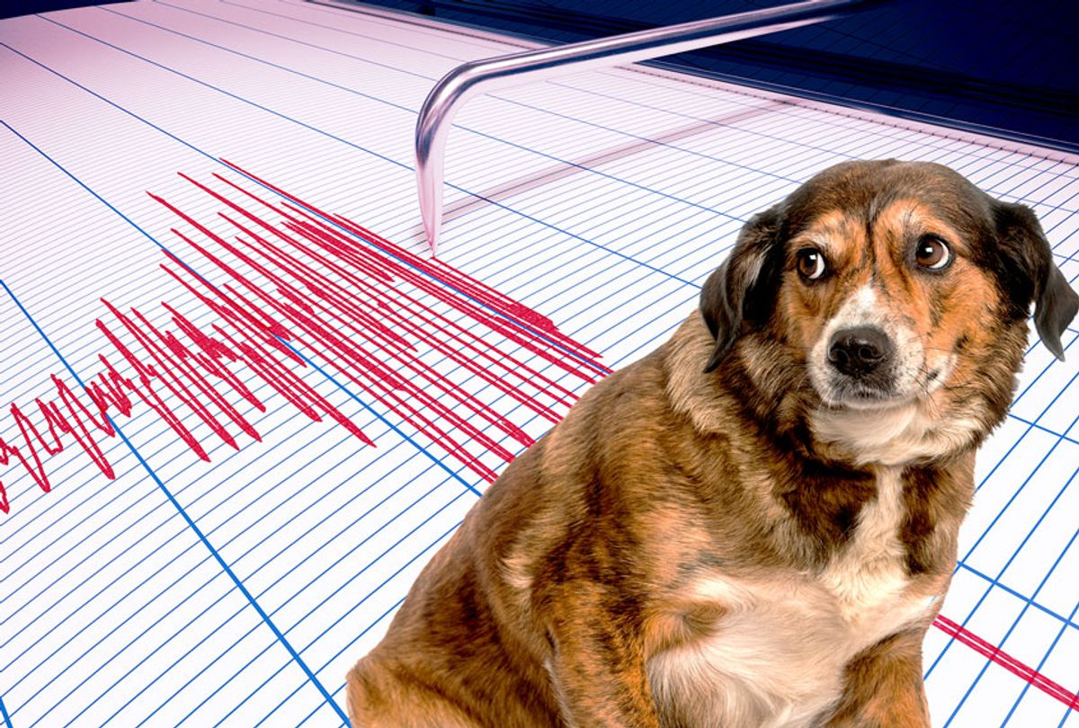 Can dogs predict when earthquakes will happen? | Salon.com
