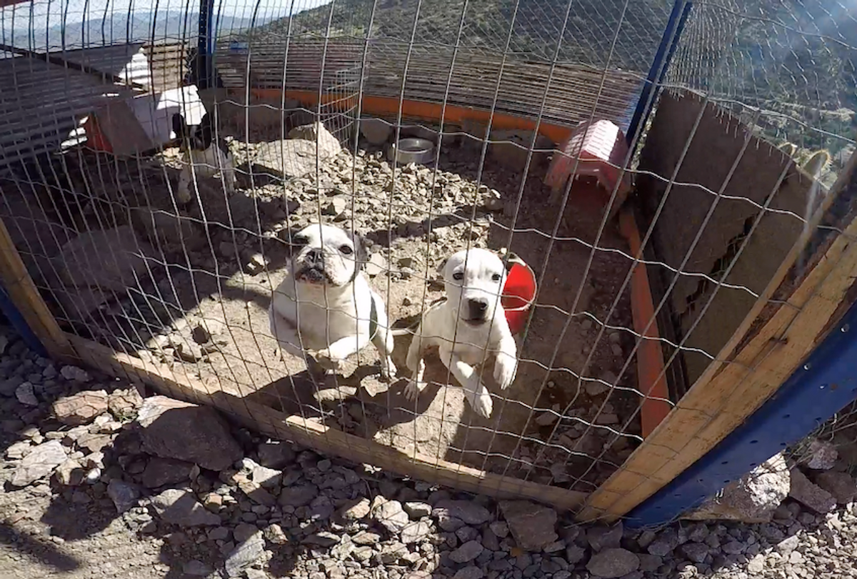 Dogs at an illegal kennel in Llay Llay, Chile.  (Lady Freethinker)