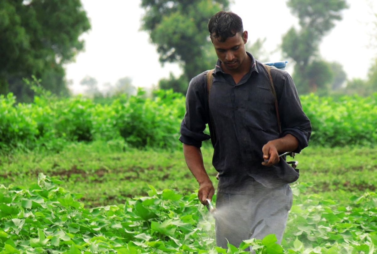 Cotton farmer in India (Andrew Flachs)