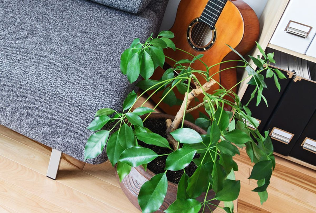 House plant and musical instrument  (Getty Images)