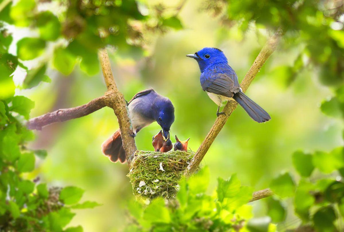 Birds in a backyard, feeding their babies (Getty Images)