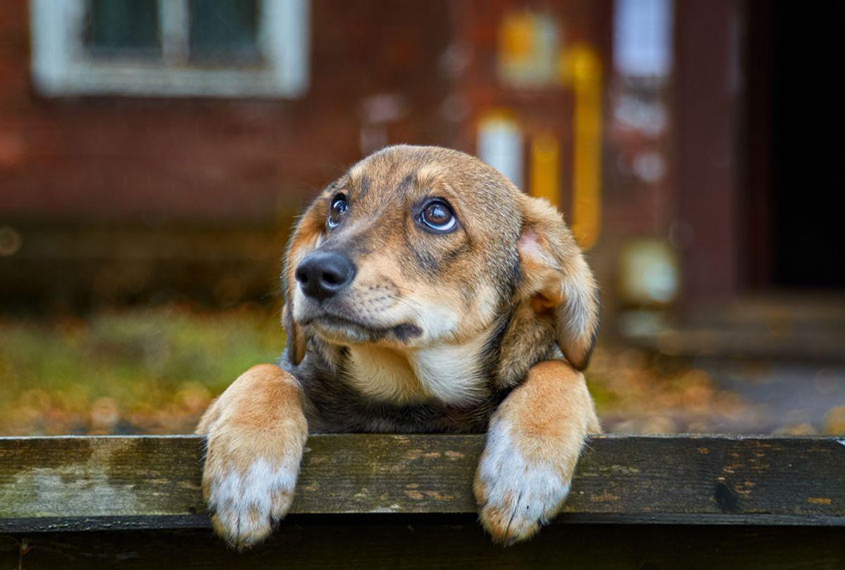 A sad little brown dog (Alexander Kuzmin/Getty Images)