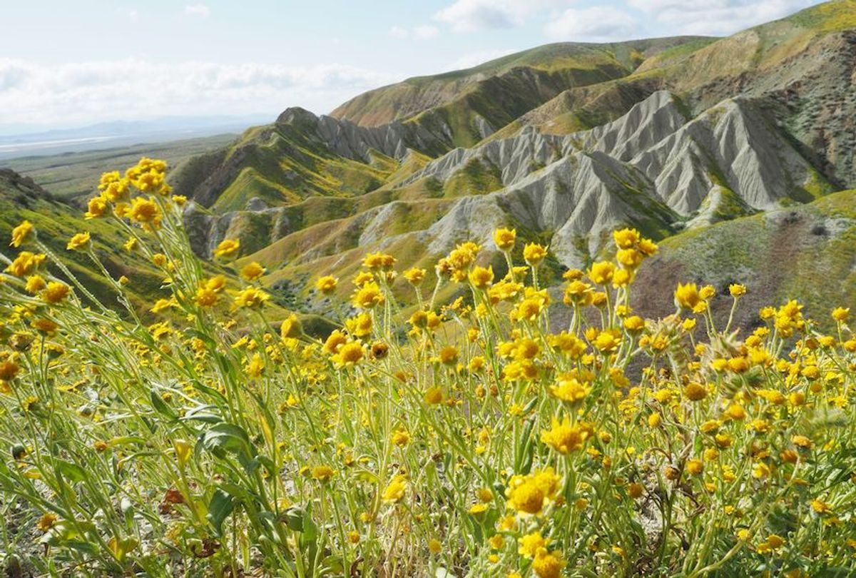 """Wildflowers cover this hills of the Tremblor Range in Carrizo Plain National Monument near Taft, California during a wildflower """"super bloom,"""" April 12, 2017.  (Robyn Beck/AFP via Getty Images)"""