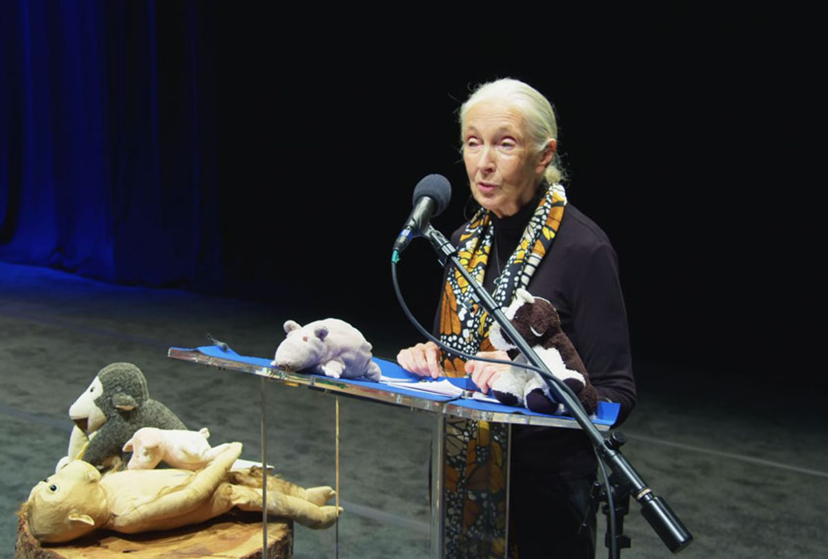 Dr. Jane Goodall giving a speech onstage at The Anthem auditorium in September 2019. (National Geographic/Chris McCary)