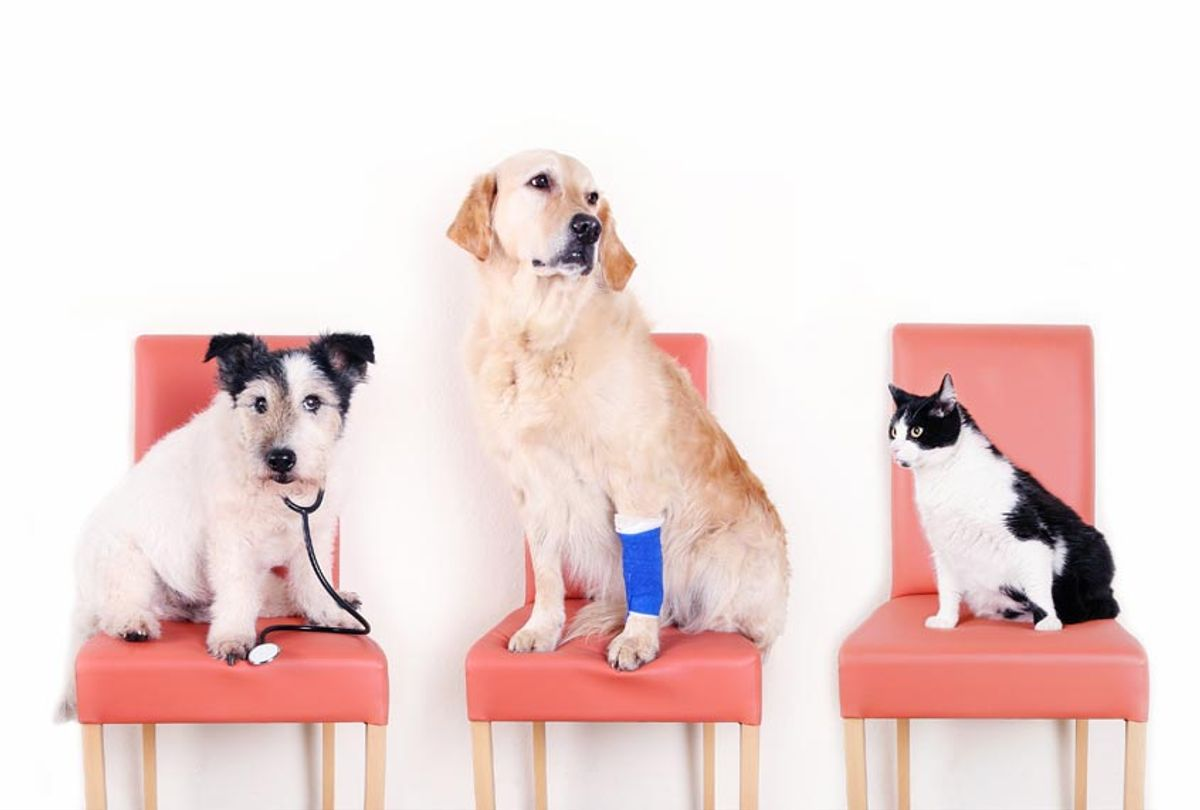Two dogs and cat waiting for the Vet (Getty Images)