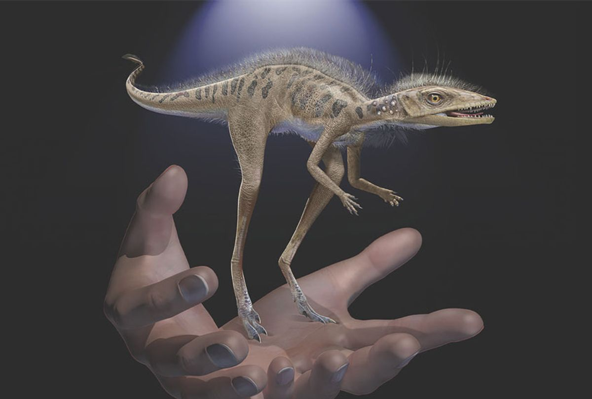 Life restoration of Kongonaphon kely, a newly described reptile near the ancestry of dinosaurs and pterosaurs, shown to scale with human hands. The fossils of Kongonaphon were found in Triassic (~237 million years ago) rocks in southwestern Madagascar and demonstrate the existence of remarkably small animals along the dinosaurian stem (Frank Ippolito/American Museum of Natural History)