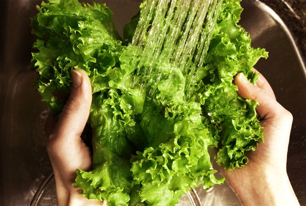 A person washing a head of lettuce (Getty Images)