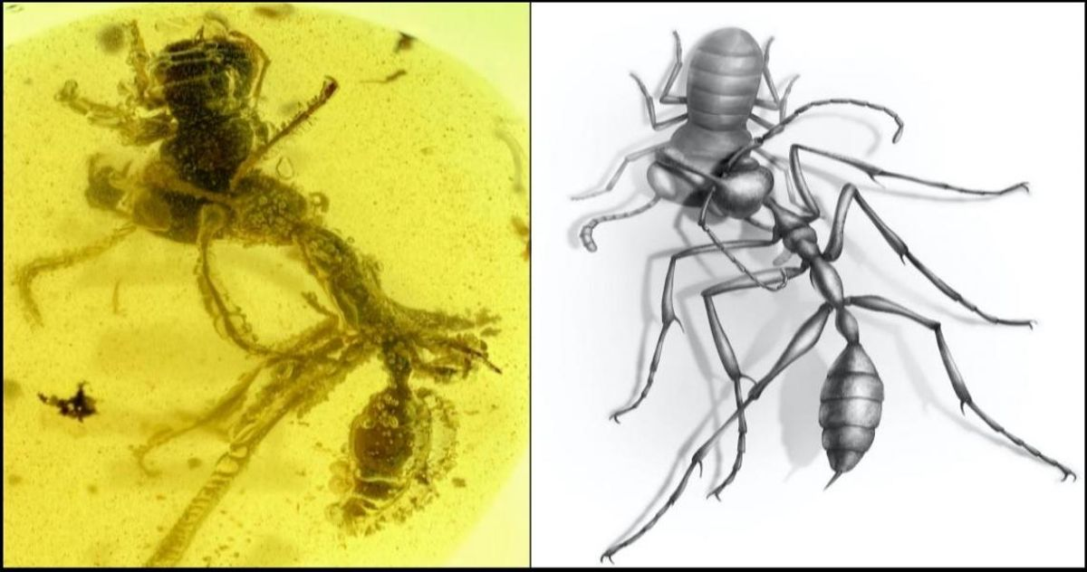 A 99-million-year old fossil of a hell ant, preserved in amber, attacking an ancient insect with its mandibles. (NJIT/Chinese Academy of Sciences/University of Rennes, France)