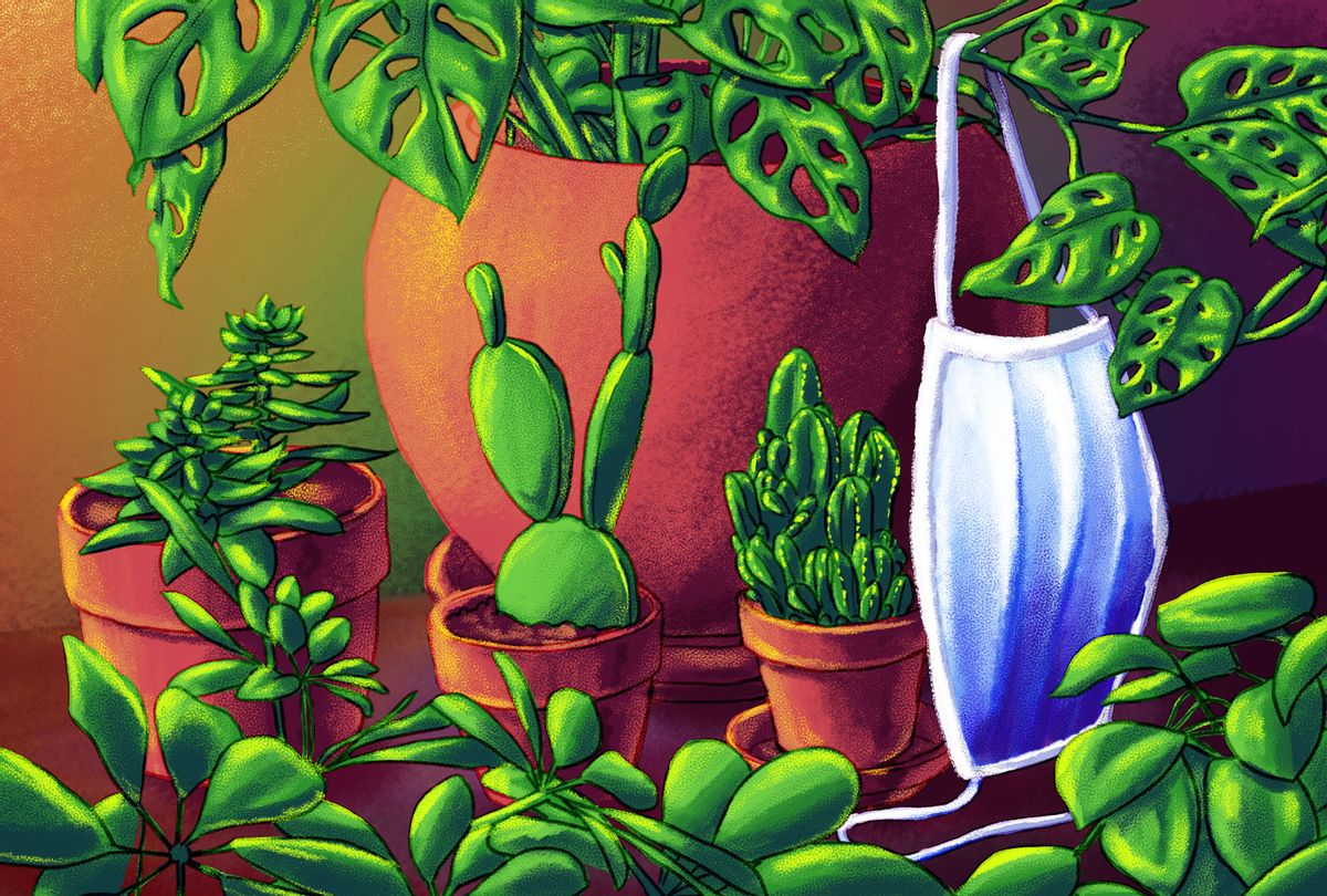 House plants, with a medical mask hanging off the stem (Illustration by Ilana Lidagoster/Salon)