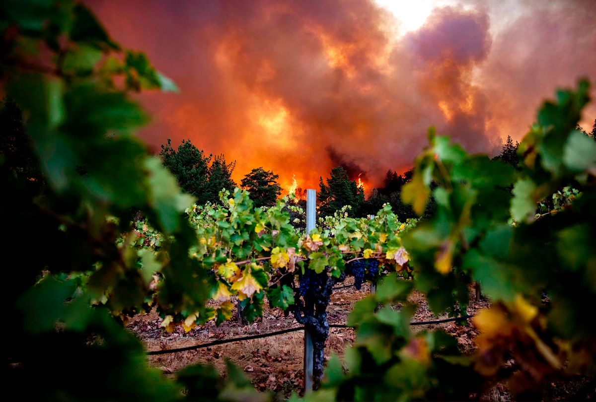 The Glass Fire burns behind Merus Wines vineyards in Napa Valley, California on September 27, 2020. - The Glass fire grew to 2,500 Acres on the evening of September 27. A heat wave and dry winds create critical weather conditions and mandatory evacuations are in order. (SAMUEL CORUM/AFP via Getty Images)