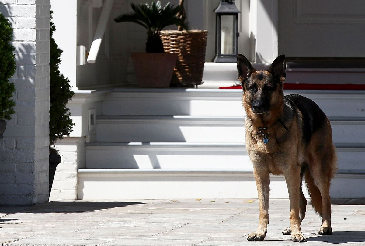 Vice President Joe Biden's dog, Champ (Win McNamee/Getty Images)