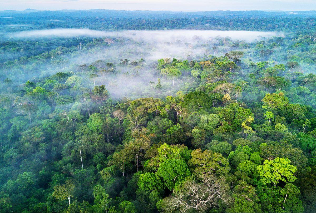 Amazon rainforest, Brazil (Getty Images)