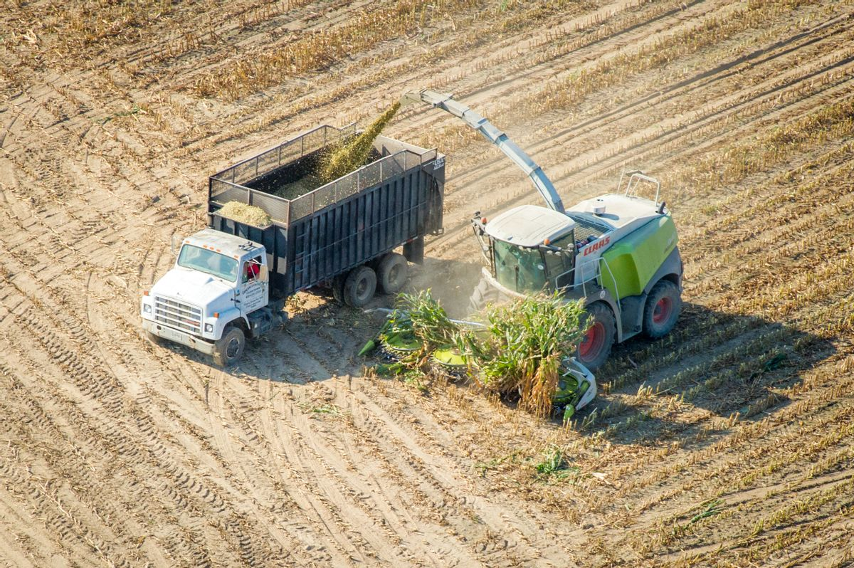 Harvesting corn silage in Maryland (Edwin Remsburg/VW Pics via Getty Images)