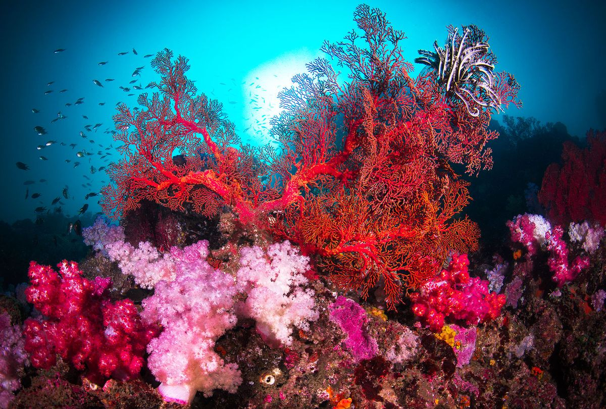 A colorful scene of gorgonian giant sea fan and soft corals on a rock in a coral reefs (Getty Images/Credit: Sirachai Arunrugstichai)