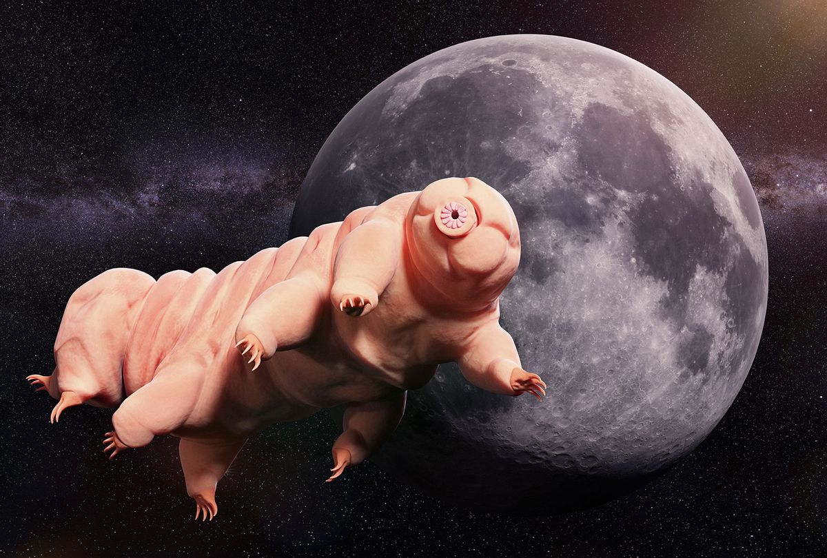 Tardigrade, water bear visiting the Moon (Getty Images)