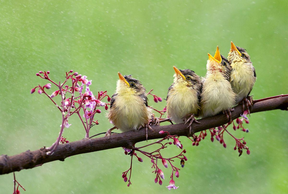 Four birds sitting on a branch (iStock-Getty Images/jeffysurianto)