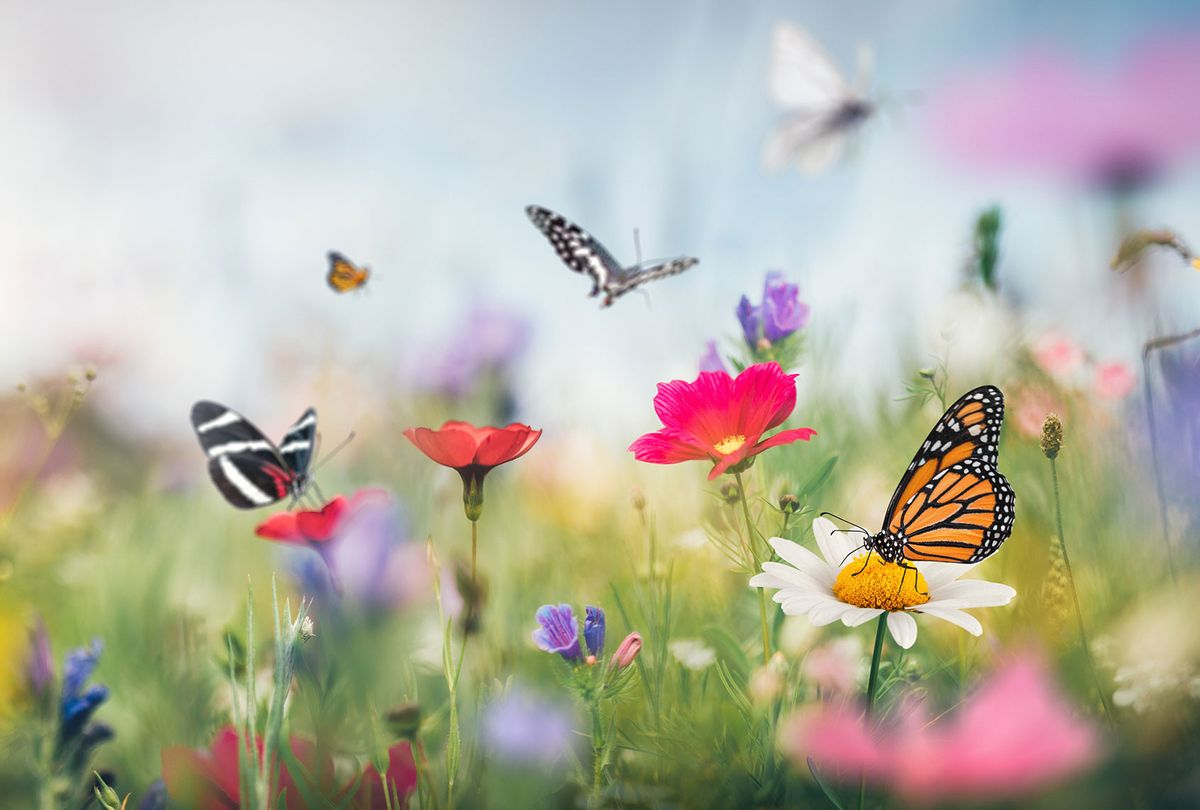Summer meadow full of colorful flowers and butterflies flying around. (Getty Images)