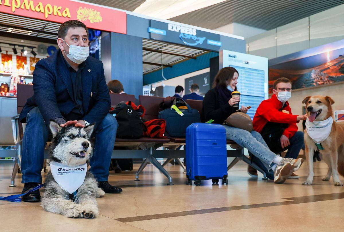 Passengers pet dogs at Dmitri Hvorostovsky Krasnoyarsk International Airport as part of the Emotional Support Dog project (Andrei Samsonov\TASS via Getty Images)