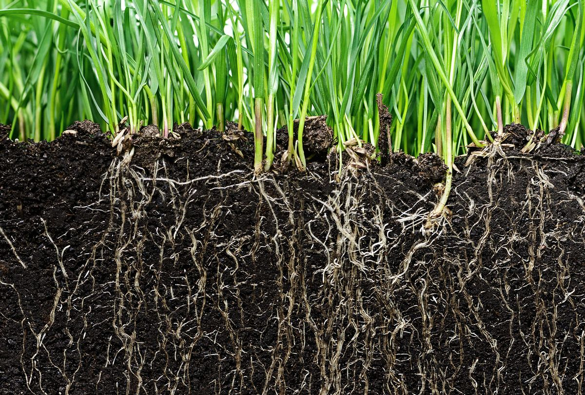 Grass with roots and soil (iStock/Getty Images)