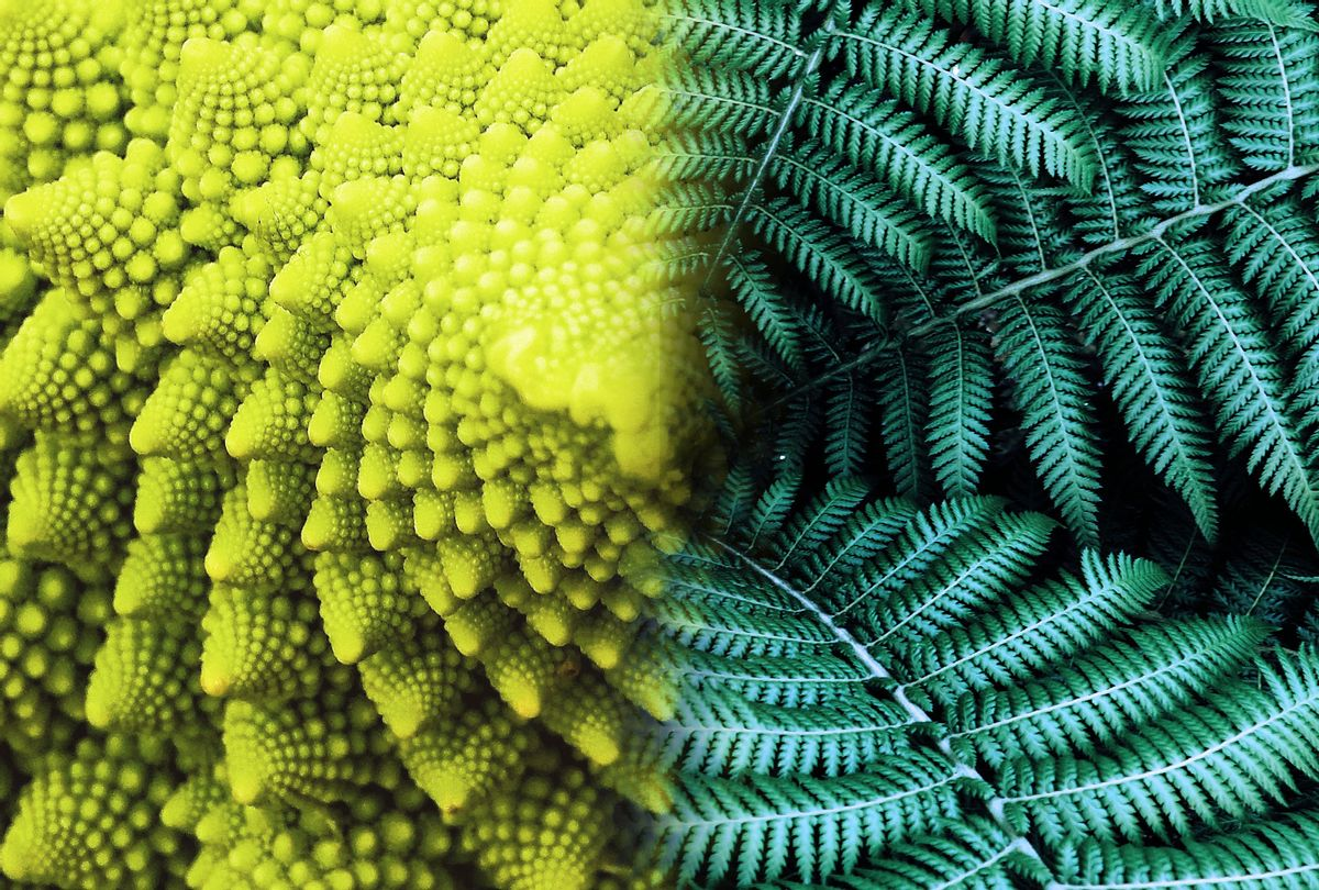 Fractals of Romanesco broccoli and fern leaves (Photo illustration by Salon/Getty Images)