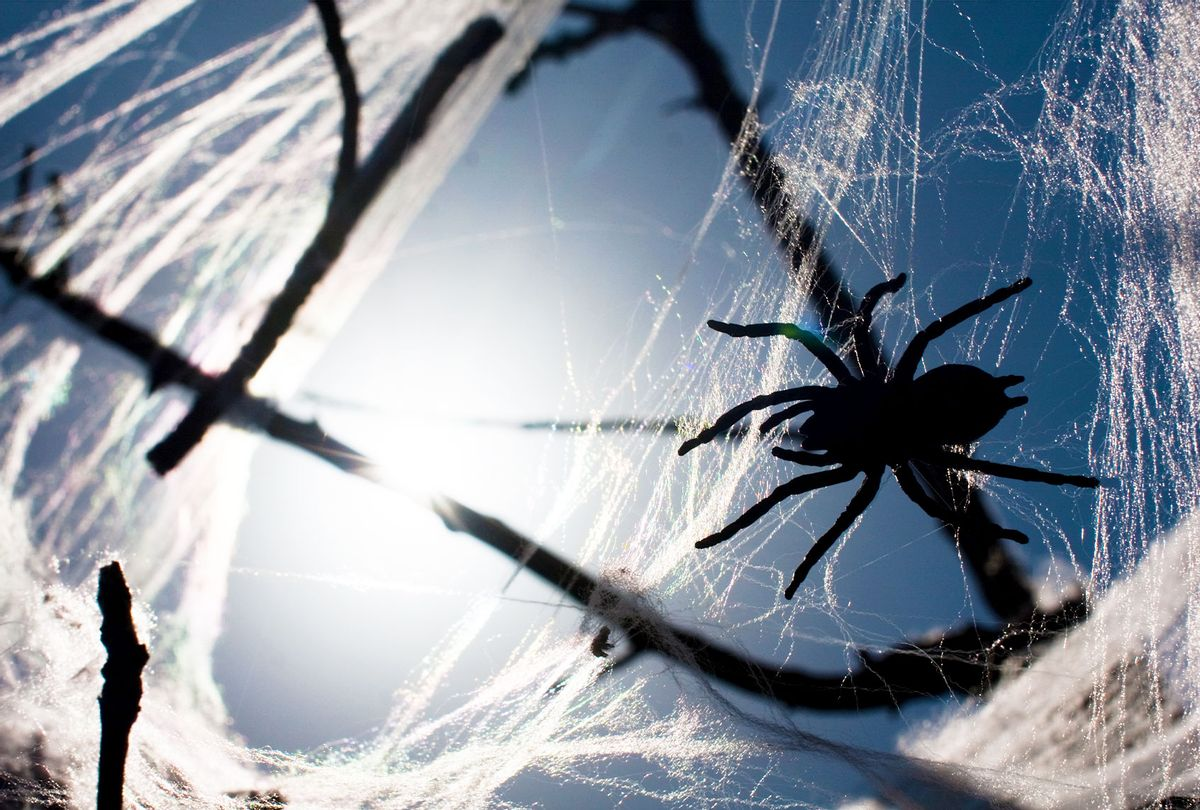 Spider in web in tree branches (Getty Images)