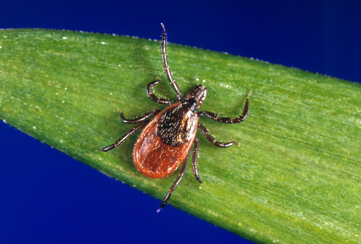 Tick on a leaf (Smith Collection/Gado/Getty Images)