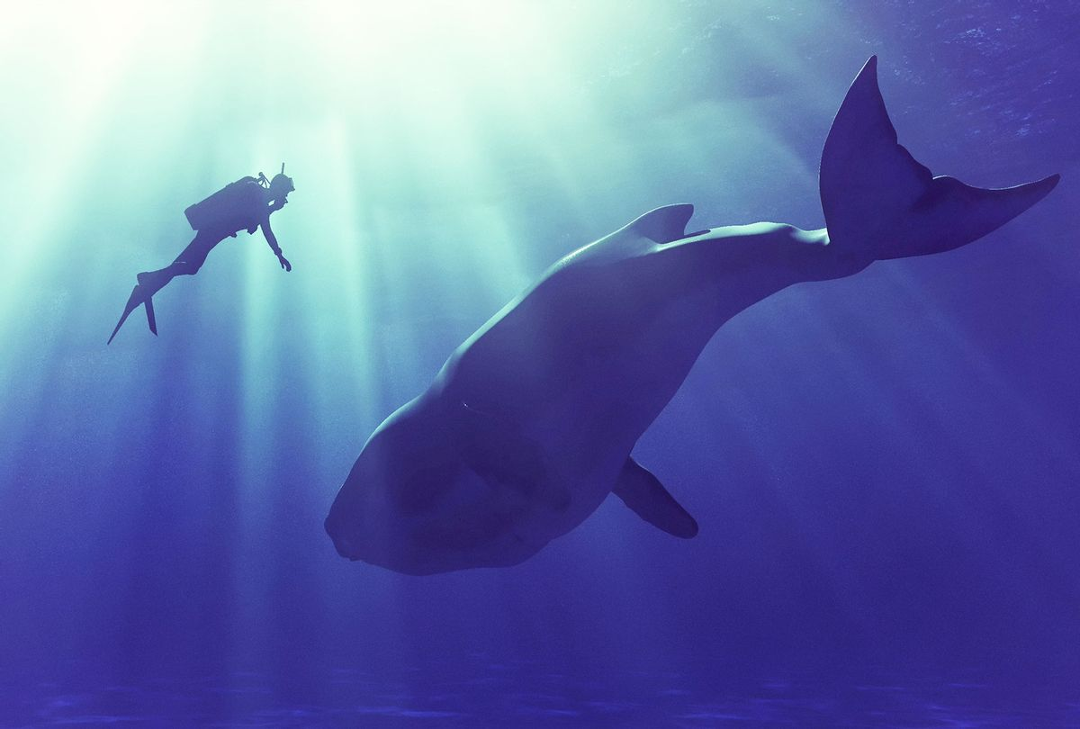 Diver swims with a whale (Getty Images/Orla)