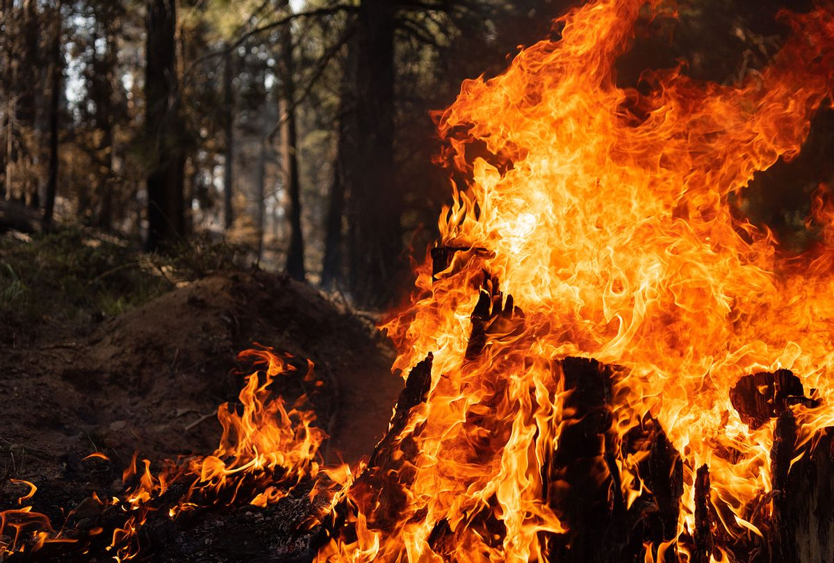 A tree stump is engulfed in flames in the Bravo Bravo section of the Bootleg Fire on July 21, 2021 in the Fremont National Forest of Oregon. The Bootleg Fire, which started on July 6th near Beatty, Oregon, has burned over 395,000 acres and is currently 38% contained. (Mathieu Lewis-Rolland/Getty Images)