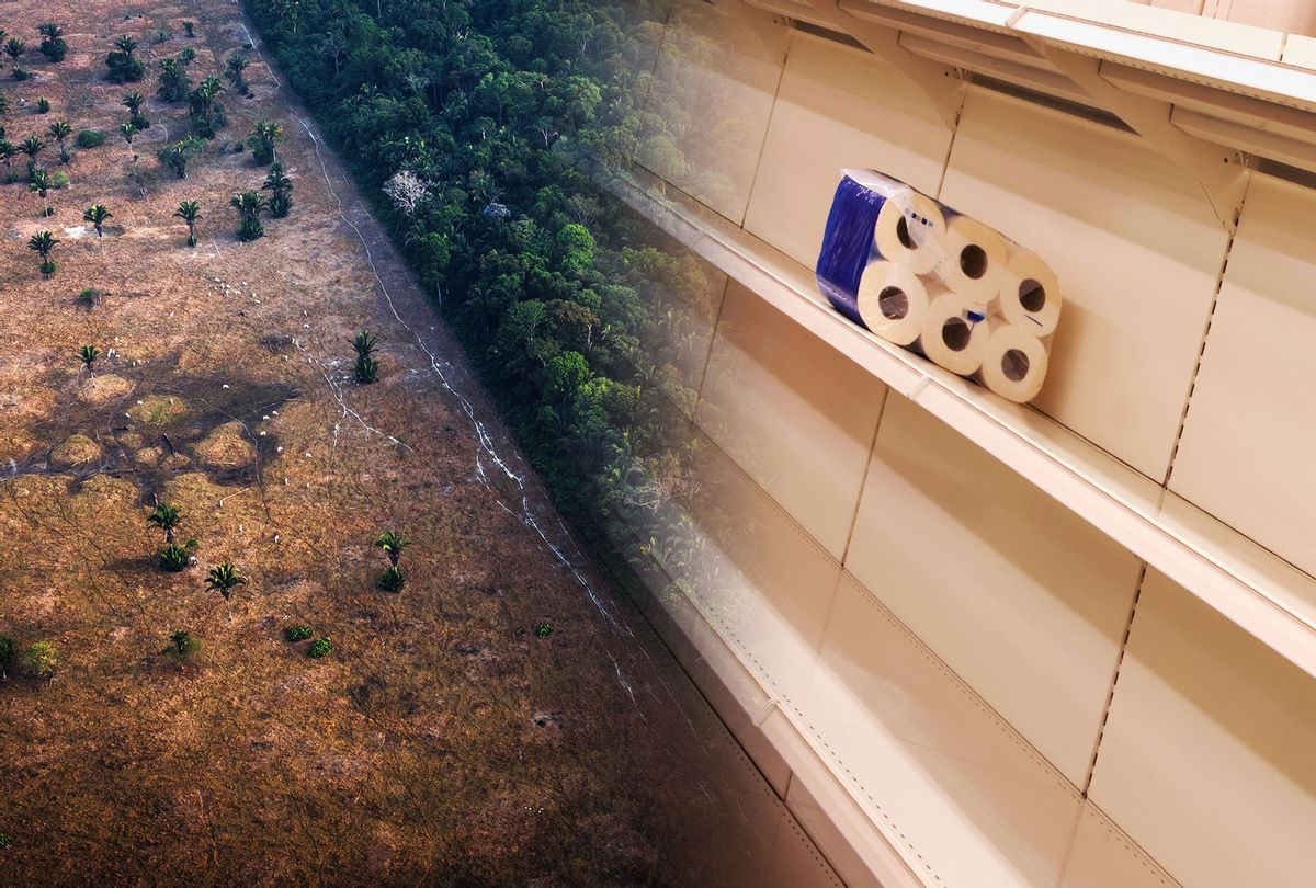 Deforestation | Bare store shelves (Photo illustration by Salon/Getty Images/Bloomberg Creative/ Alan Powdrill)