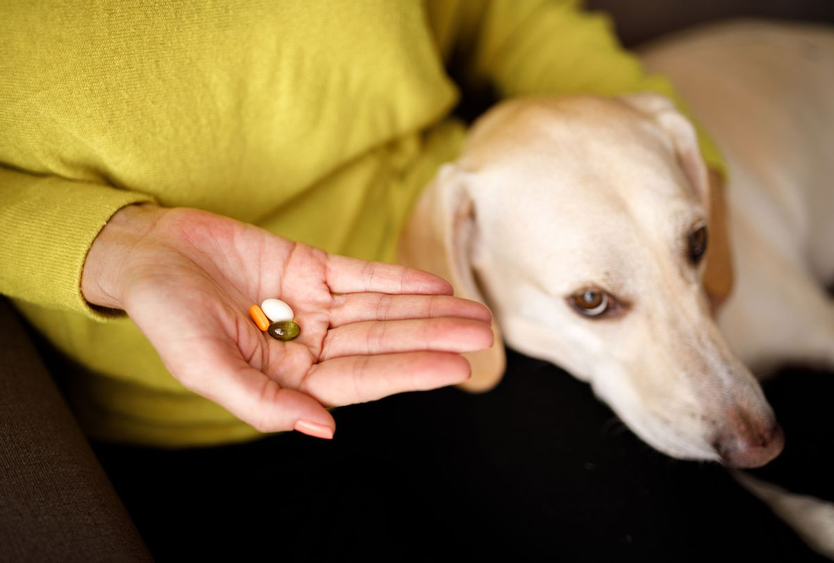 Dog medicine (Getty Images/Capuski)