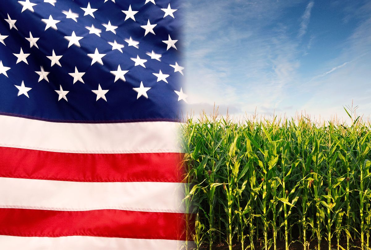 American flag and a corn field (Photo illustration by Salon/Getty Images)