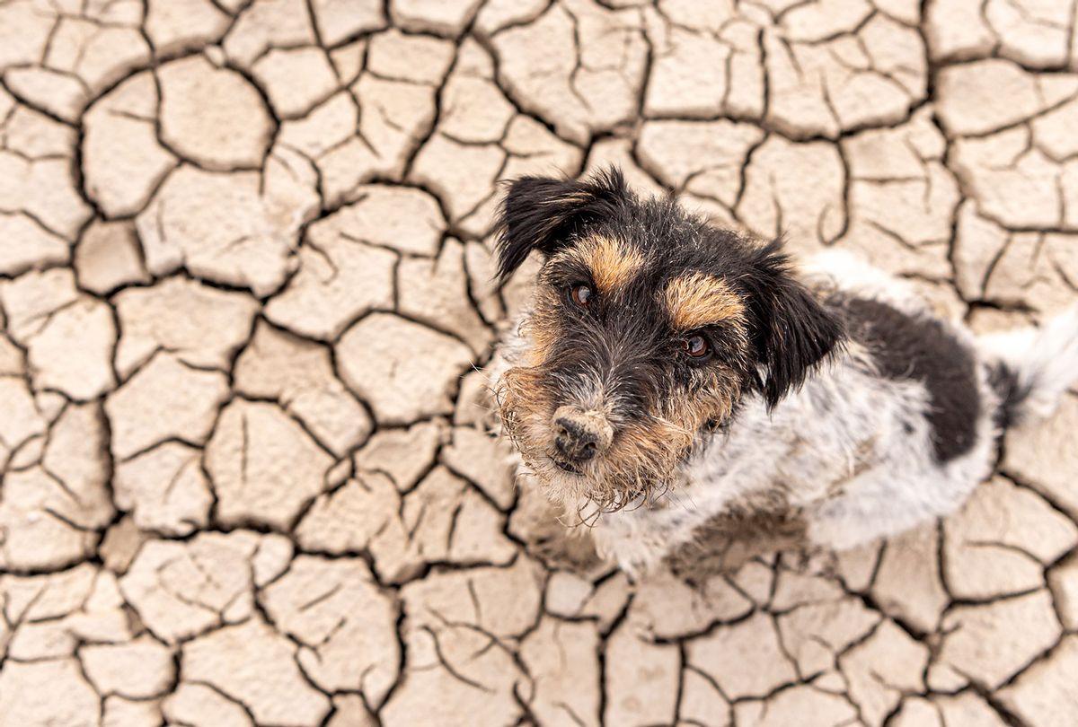 Dog sitting in a dry sandy desert (Getty Images/K_Thalhofer)