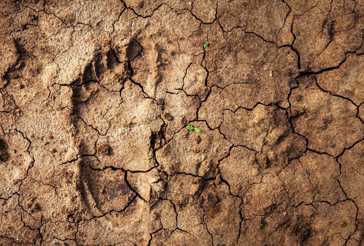 Human footprint in the desert (Getty Images/Guido Dingemans, De Eindredactie)