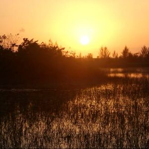 Climate change alters restoration in Florida's Everglades