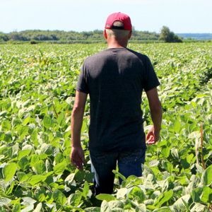 Organic food is booming, but it's grinding field laborers into the dirt