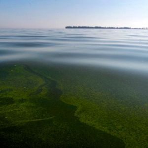 The battle for rights of nature heats up in the Great Lakes