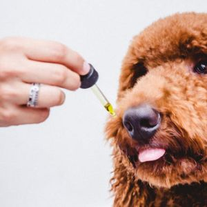 Why you should consider CBD oil for your pets