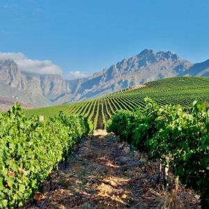 Discover the vineyards less traveled in South Africa's wine country