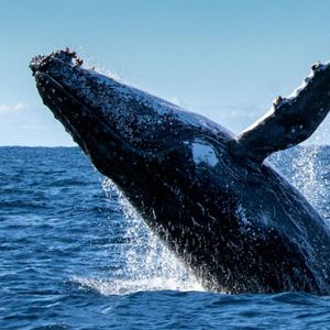 Plastic a bigger threat to whales than oil spills or drilling, study says