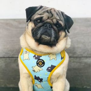 How owning an Instagram-famous pet changes your politics