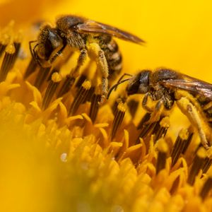 Bees: Bugs you can't live without