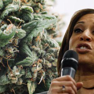 Kamala Harris introduces legislation to decriminalize marijuana at federal level