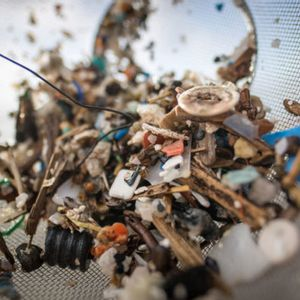 The ocean is teeming with microplastic — and it's leaching into our food systems