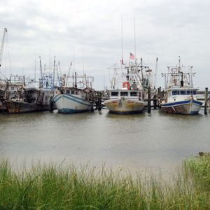 How a little known government board decimated gulf coast fisheries