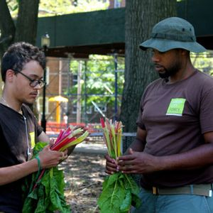 Clean soil is rejuvenating New York's urban farms