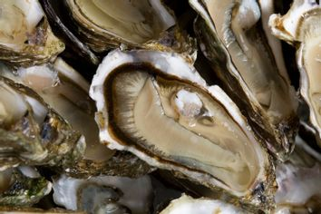 Oysters are presented by producers near Bordeaux as ban lifted ager toxins scare
