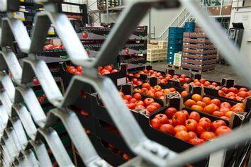 Germany EU Contaminated Vegetables